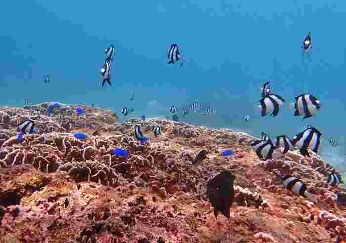 穏やかな波のビーチは、初心者向けのダイビングスポットにもなっています。イムギャーマリンガーデンの海中では、色とりどりの魚たちが優雅に泳ぎまわっています。