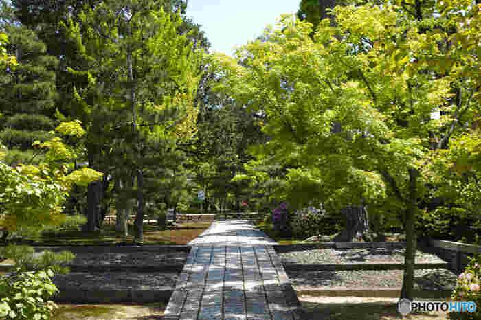 京都市東山区にある智積院は、16世紀末に建立された真言宗智山派の総本山です。境内には、無料で入園することができる紫陽花苑があり、梅雨時には金堂付近を中心に、次々と綺麗な花を咲かせます。