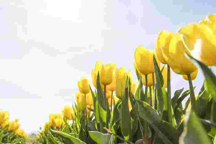 新しいことが始まり心が踊る4月。お花見や新歓迎会など集まりも多くなります。旬の食材をしっかりいただいて、春の風とともに颯爽と毎日を過ごしていきましょう♪