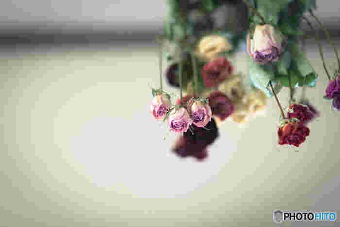 バラはカラーも豊富で、ただ吊るしておけばいいハンギング法でも十分に美しいドライフラワーにすることができます。どのシーズンでもお花屋さんにいつでも置いてあるお花なので思い立ったらすぐに着手することができますね。一週間から二週間ほどできれいなドライフラワーが出来上がります。