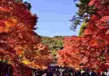 """小倉山の豊かな自然に囲まれた「二尊院」。  一番の見所は、総門から勅使門へと伸びる「紅葉の馬場」と呼ばれる広い参道。晩秋の頃は、燃え立つ""""ように紅色に染まったカエデが参道の左右から迫ります。"""