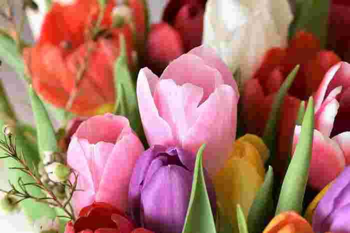 ユリ科チューリップ属。数多くの品種がありますが、花言葉は、色によって区別されています。 ポジティブな花言葉をピックアップすると、赤:永遠の愛、愛の告白、ピンク:誠実な愛、幸福、紫:不滅の愛、気高さなど。