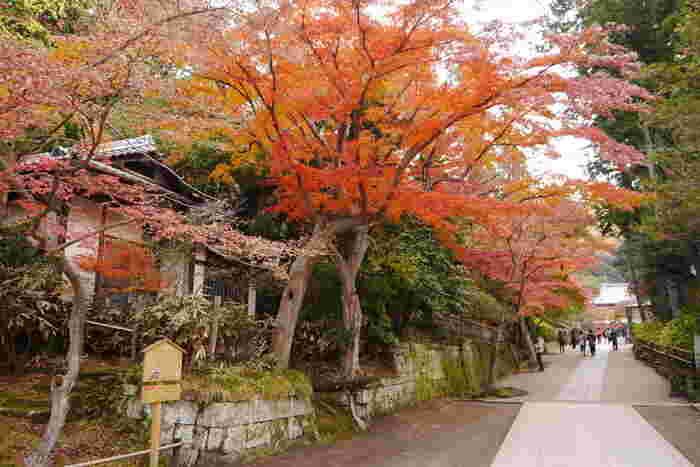 広い境内は、紅葉を愛でながらゆっくり散策するのにぴったりです。