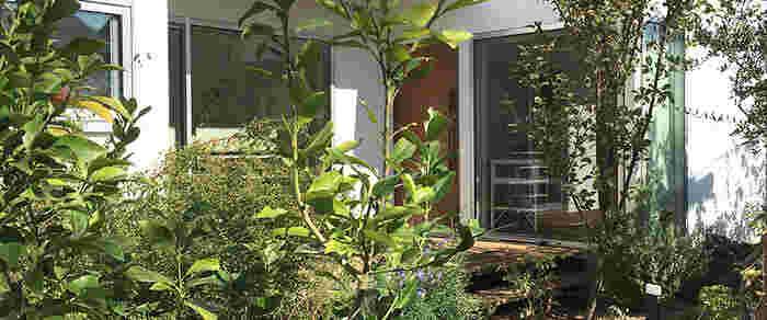松尾郁子さんが主宰する大阪の箕面にあるアトリエ。不定期にワークショップなども開催されます。松尾さんの豊かな感性とマッチする草花が生き生きとした美しいお庭が印象的です。