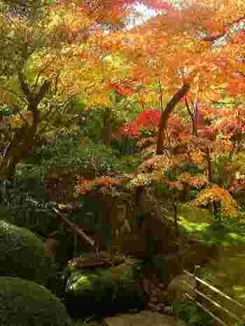 風雅な一時を味わえる、紅葉の頃の「寿立庵の庭」