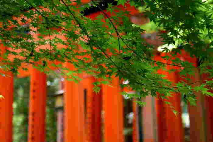 外国人観光客の一番人気ともいわれる「伏見稲荷大社」。特に、どこまでも続くような朱の千本鳥居は、日本人の私たちも一度は訪れてみたいところ。どの季節も人気ですが、ぜひおすすめしたいのが初夏の季節です。