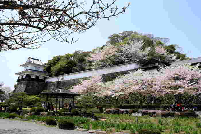 玖島城跡地に造られた大村公園は、長崎県屈指の桜の名所として知られています。
