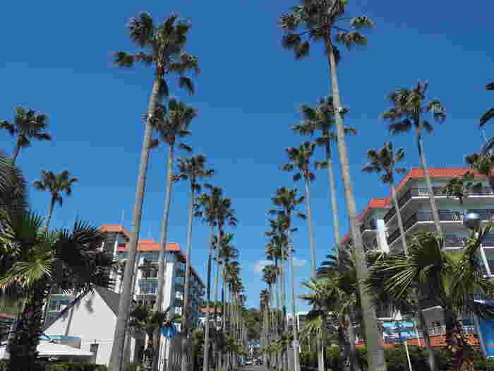 背のたか~い椰子の木!ここはどこ?ロサンゼルス?いえいえ、逗子マリーナです。