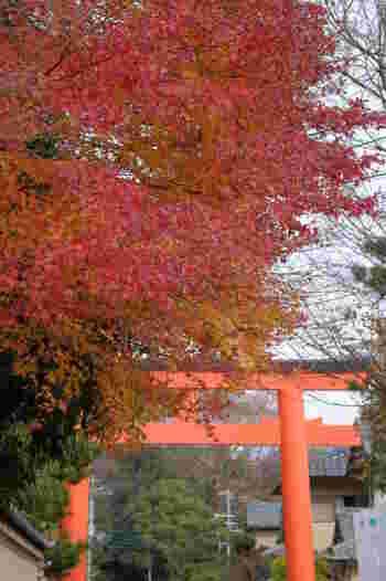 下鴨神社は、京阪「出町柳駅」から徒歩12分ほど。紅葉の見頃が少し遅めで、12月に入ってからも紅葉を味わうことができるスポットです。