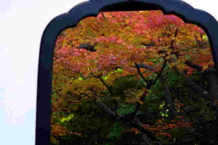 花頭窓から覗く「清浄の庭」。紅葉の時期の風情は格別です。