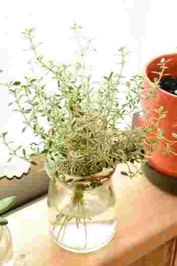「タイム」 シソ科のハーブであるタイムには、400もの種類が!料理の臭みを消してくれるため、肉料理などと一緒に良く使われています。春~夏にかけて、小さく可憐な花が咲くかわいらしい種類のタイムも。育てるほどにどんどん増えていくハーブです。