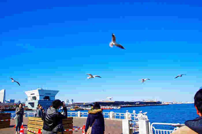 横浜マリンタワー の展望で横浜の街を眺め、 山下公園 を自由に散策します。氷川丸や横浜港の景色を楽しんで下さい。