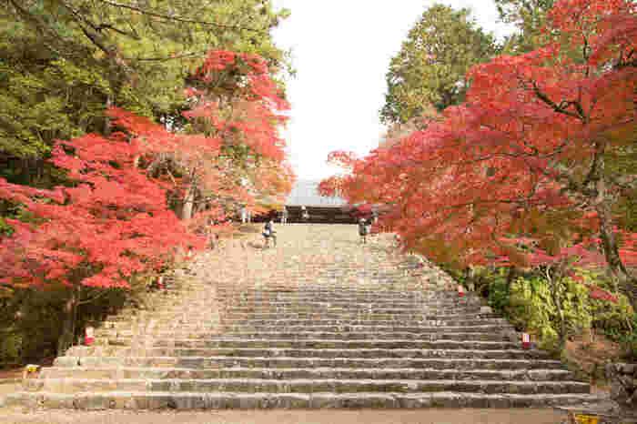 高雄橋から険しい石段を約10分登り続けると、神護寺山門前の大階段が見えてきます。大階段の両側は、深紅に染まった美しいモミジが並木となっており、素晴らしい景色が険しい石段を登り続けてきた疲れを忘れさせてくれます。