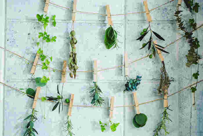 グリーンを中心としたレシピなら、単色のカラーグラデーションが美しく、それぞれ葉の形状を楽しむのにもピッタリなハーバリウムができあがります。グリーンのみで構成してもよし、好きな差し色を入れてもよし。バランスを見つつ、調整しやすいので初心者さんにおススメのレシピです。