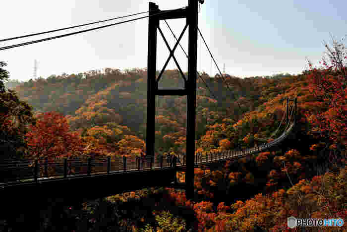 延長280メートル、最高地上高50メートルの吊り橋、「星のブランコ」があるほしだ園地は、大阪府交野市の山間部にある国定自然公園です。広大な敷地を誇る園内には。コナラ、ヤマザクラ、モミジといった落葉樹の樹々が植樹されており、毎年晩秋になると山全体が錦を纏ったかのような姿となります。