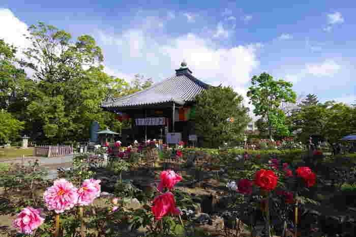 乙訓寺は、飛鳥時代に推古天皇の勅命によって、聖徳太子が創建した寺院で、京都府でも真言宗の仏教寺院です。ここは、長岡京が創られた時代よりも以前に創建された古刹です。