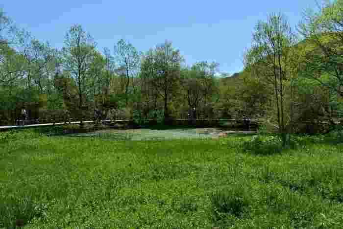 また、「仙石原」には、高原の自然を満喫する絶好のスポットもあり、豊かな緑に癒やされながら、心地良い散策もできます。【5月初旬の「箱根湿生花園」】