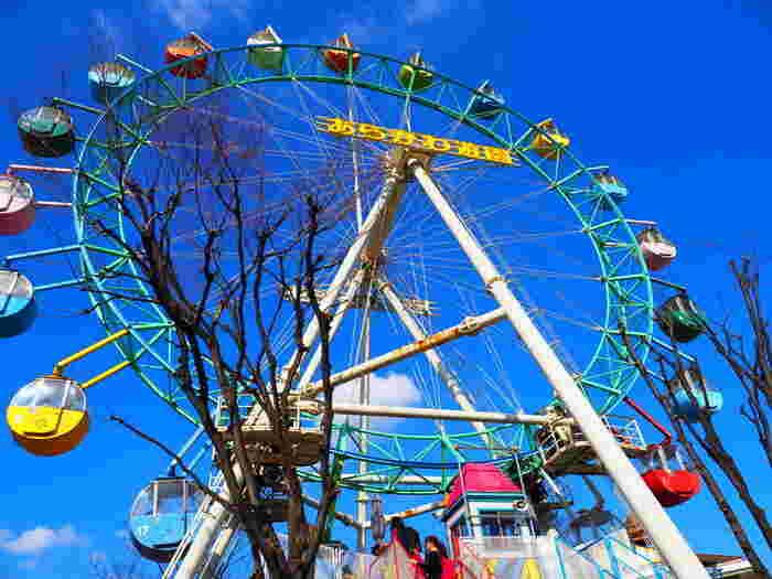 大正1年に開園した「あらかわ遊園」は、都内唯一の公営遊園地です。遊園といっても、元々は演芸場なども含めた総合レジャー施設だったそうで、今のような遊園地となったのは昭和になってからです。