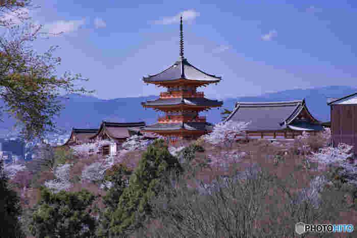 「清水の舞台」で有名な清水寺は、京都観光に欠かせない世界遺産の古刹です。境内にはソメイヨシノ、山桜などが咲き誇り、春の清水寺に彩りを与えています。