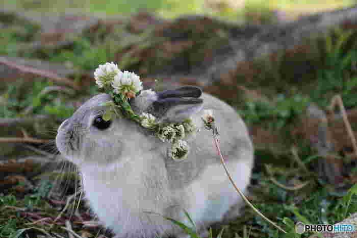 お花あそびで童心にかえってみてもいいですね。子供の時より上手に作れるかもしれません。(※花を摘む行為を禁止している場所もあるので注意してください。)