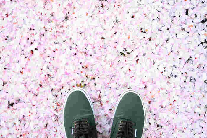 足を踏み出すのに躊躇するほどの美しい世界を楽しめますよ♪