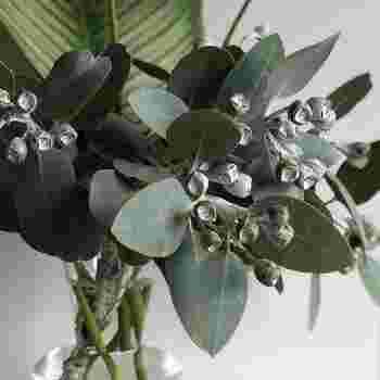 切り花にすると美しさが際立つのは、テトラゴナ。テトラゴナには2種類あり、画像のように白い実がなり全体的に銀色っぽいものはテトラゴナ シルバー呼ばれ、青々したものはテトラゴナ グリーンと呼ばれています。