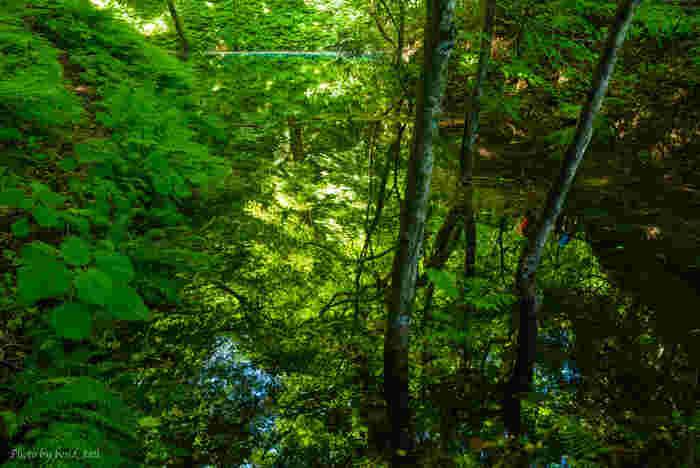 世界遺産のなかでも自然遺産に登録されている、手つかずの森「白神山地」。青森県と秋田県にまたがっており、その森の面積は沖縄本島よりも広大です。