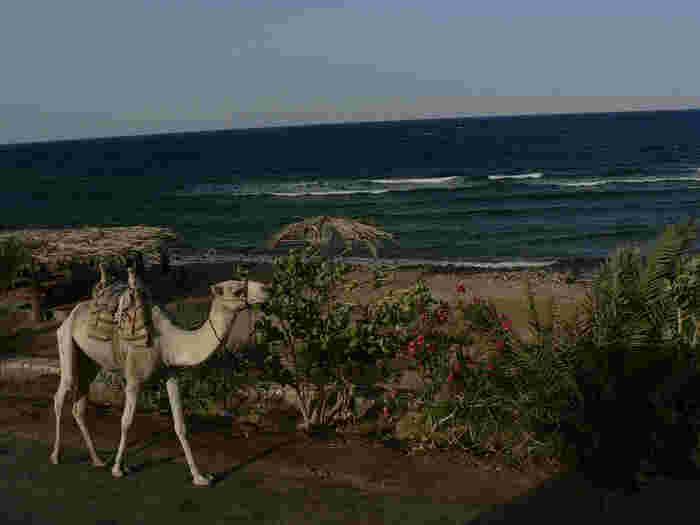 周辺にはラクダが歩いているんだとか!