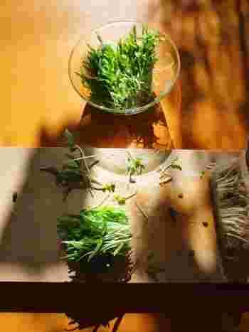 アレンジ多彩!栄養満点&美味しい「空芯菜(くうしんさい)」レシピ集