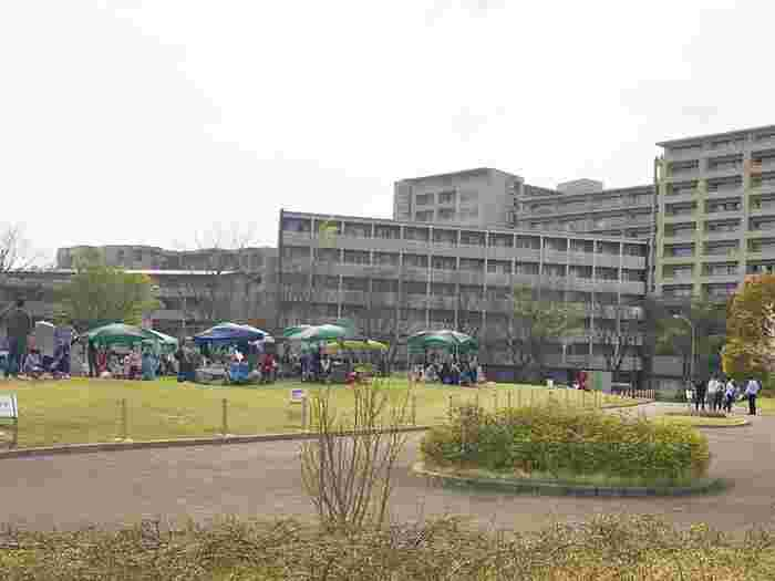 「昭和音楽大学」の前に広がるスペースです。ボランティアの方たちによって、3年もの月日をかけて整備された芝生だそうで、今でも毎週土曜日に手入れが行われています。  広々としたスペースにはベンチもあり、お弁当を食べる人や芝生で遊んでいる子どもの姿も。休日には、様々な屋外イベントの会場に使われています。
