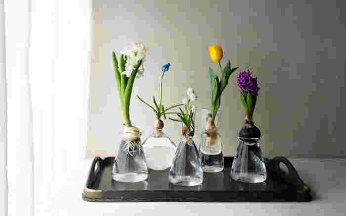 ヒヤシンスやムスカリなどの水耕栽培用のガラスのポットです。こちらは一点一点手作りで作られています。
