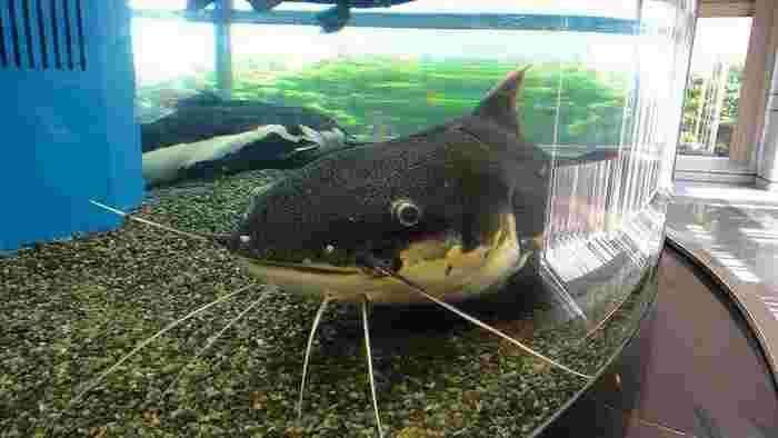 「ぎょぎょランド」は、市内を流れる豊川水系の自然を再現している他、世界の熱帯魚なども展示しているミニ水族館です。映像やパネルを使った分かりやすい解説もあります。