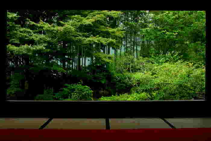 宝泉院の庭園は「額縁庭園」と呼ばれています。これは、柱や鴨居によって風景が額縁のように切り取られて一枚の絵画のように見ることができるため。竹林の向こうには大原の里が垣間見えます。