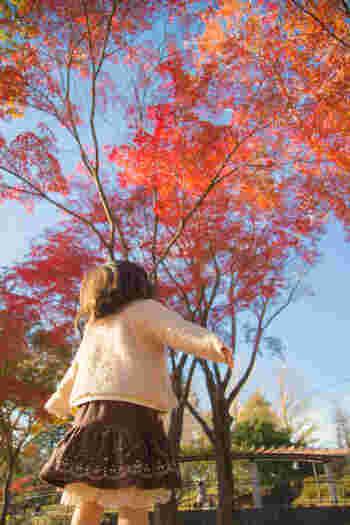 「子どもは風の子」というように、外で遊ぶのが大好きな子供たち。  寒い季節でもお散歩しながら落ち葉を拾ったり、走り回ったりと、元気いっぱいですよね。  そんな彼らの防寒対策の必需品といえば・・?