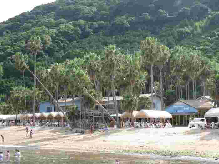 昭和42年にOPENした「能古島キャンプ村海水浴場」。ビーチとキャンプ、バーベキューを楽しむことができます。福岡県の海水浴場にキャンプ場があるのはココだけ!周りは緑に囲まれて、たくさんのヤシの木がリゾート感を演出しています。ヤシの木にはブランコが吊るされていて、まさに南国のよう♪