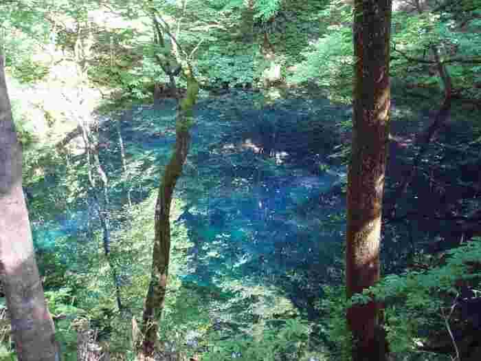 こちらは水面に木々が反射して映っています。 このように見る角度や場所によって全く違った雰囲気になるのもミステリアスで魅力的。