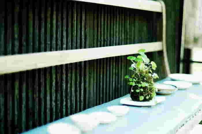 苔玉の栽培には、ボウルや小さめのバケツなどが理想的です。用土をこねたり、出来上がった苔玉全体を水につけるのに用います。完成してからは、お部屋の雰囲気に合わせて鉢やプレートに置くと、インテリアとしての存在感がでますよ。