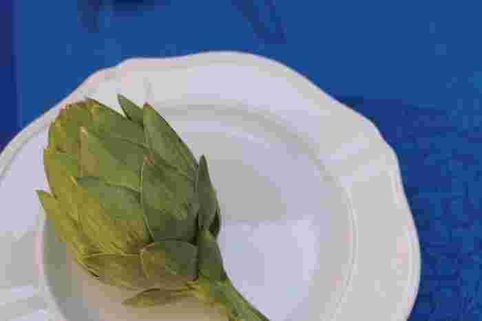 アンティチョークは、日本では手に入りにくいので自家栽培するといいかもしれませんね。ちょっと大きめの鉢で育てます。ニョキッと伸びた茎の先に真ん丸の花芽がふくらむ姿はなかなか感動的です。