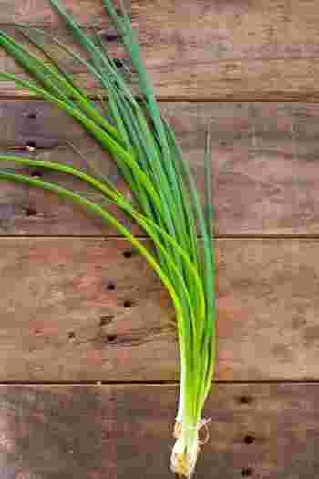 □植え時:5月、10〜11月 □収穫:7〜9月、2〜3月 □青ネギとも呼ばれます。毎日の味噌汁に大活躍!