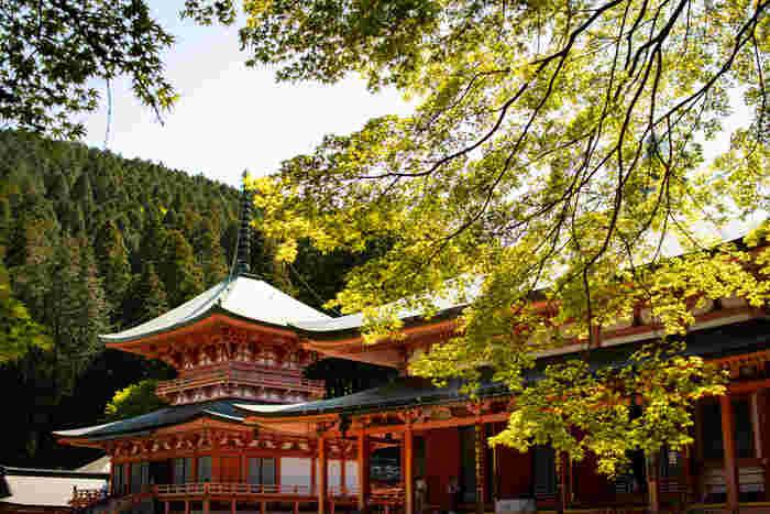延暦寺には「延暦寺」という建築物があるのではなく、総面積1700ヘクタールにおよぶ比叡山全域に点在する寺院建築物の総称です。
