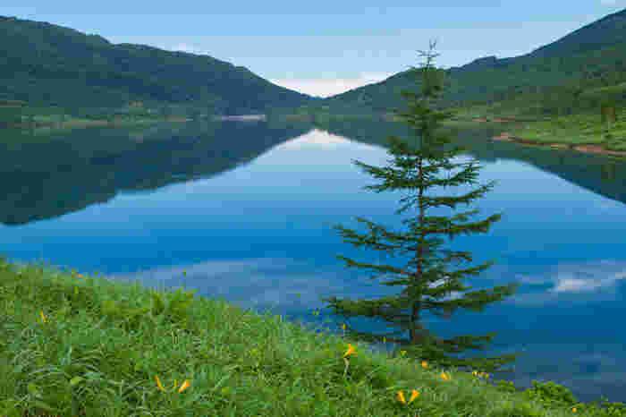 野反湖は群馬・長野・新潟の3県の県境に位置するダム湖で、周囲を2000メートル級の山々に囲まれています。 野反湖は「ダム湖百選」に、周囲の遊歩道は「遊歩百選」に選ばれています。