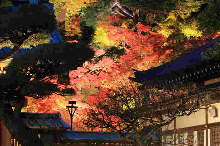 みてください!赤や黄色に色づいた紅葉がライトアップされて、ため息ものの美しさです。実際に目にすると、夕方の闇と照明があたった紅葉との奥行感が圧巻です!