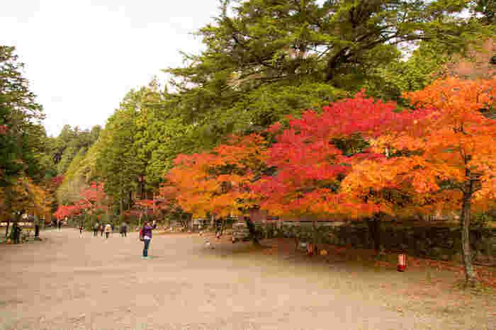 神護寺境内の庭園にはモミジなどの落葉樹だけでなく常緑樹も混在しています。神護寺は、古い山寺の風情を醸し出しながらも、大きな公園のような雰囲気も併せ持ち、参拝者の心を癒す不思議な魅力を放っています。