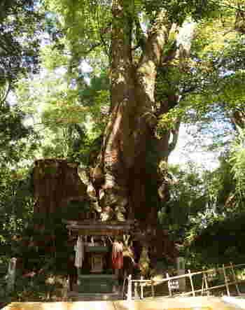 來宮神社一のパワースポットは、こちらの樹齢2000年といわれる大楠です。日本では2番目の大きさで、長寿の神木、成就の神木ともよばれています。心の中でお願い事を唱え、幹の周りを一周すると願い事が叶うそう。より良い明日を迎えるために、神木のパワーをいただいていくといいですね。