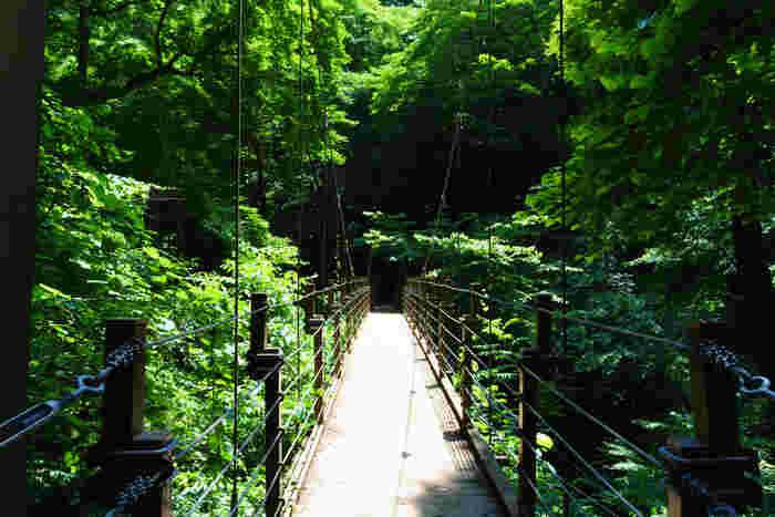 4号路の途中にある高尾山の名所の吊り橋「みやま橋」左右に広がる森の中を歩くことができる、絶景スポットです。