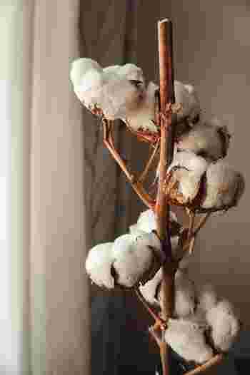 コットンは、綿花から採れる繊維で織られた生地のことで、木綿とも呼ばれる天然素材です。通気性や吸水性が良く、肌にもやさしいため、快適な着心地をもたらします。