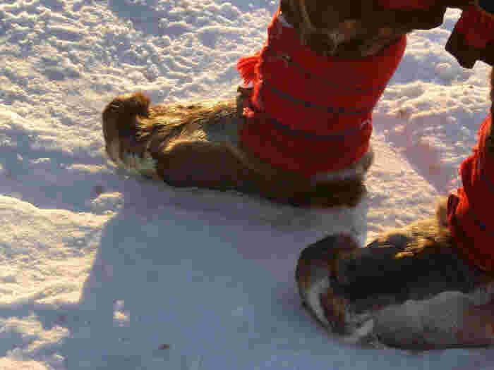 そしてトナカイの毛皮を身にまとったり、家の中に敷いたりして寒さから身を守ってきたのです。