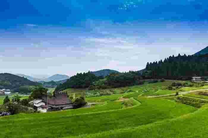 長谷の棚田は、大阪市中心部から少し足を延ばした大阪府豊能郡豊能町に位置する棚田です。ここでは茅葺屋根の民家が点在しており、のどかな田園風景が広がっています。
