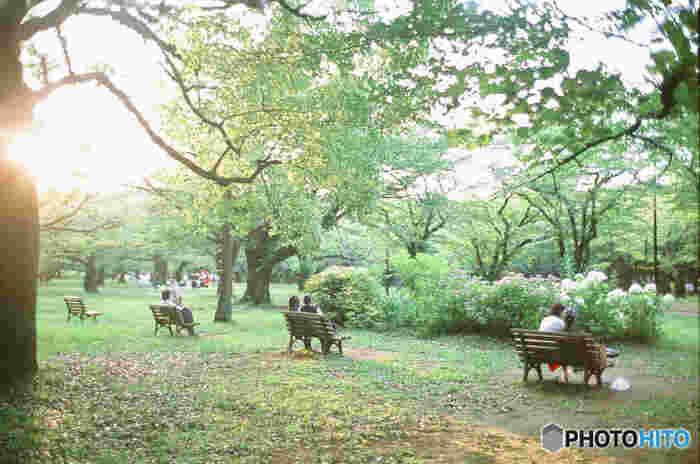 憩いを求めて老若男女問わずたくさんの人でにぎわう代々木公園。自然に囲まれて、思わずほっと笑顔がこぼれます。