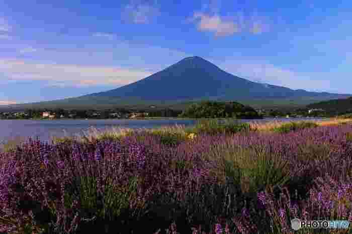 富士五湖の中では観光スポットとしては一番有名と言っても過言ではない河口湖。富士五湖の中で一番長い湖岸線の河口湖を一周するならレンタサイクルもおすすめです。晴れた日は水面に逆さ富士が見られます。かちかち山ロープウェイ、遊覧船、猿回し劇場、オルゴールの森や美術館など観光スポットも盛りだくさんなだけでなく、温泉街もあり宿泊施設も充実しています。